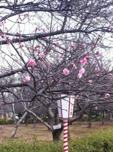 春間近です
