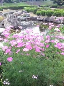 袖ヶ浦公園散策